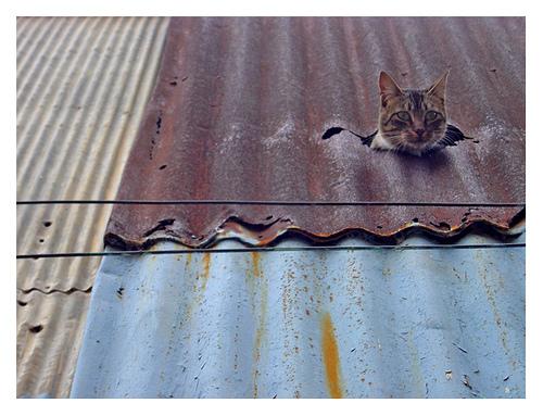 mizou :      d-d-d :  burnworks :  webtopics :  hanalaboratory :   gato sapo (via  PequeLulein )