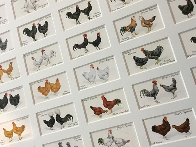 Someone likes chickens! Multi-aperture mount with 50 Player's cigarette cards #chickens #playerscigarettes #cigarettecards #multiaperturemounts