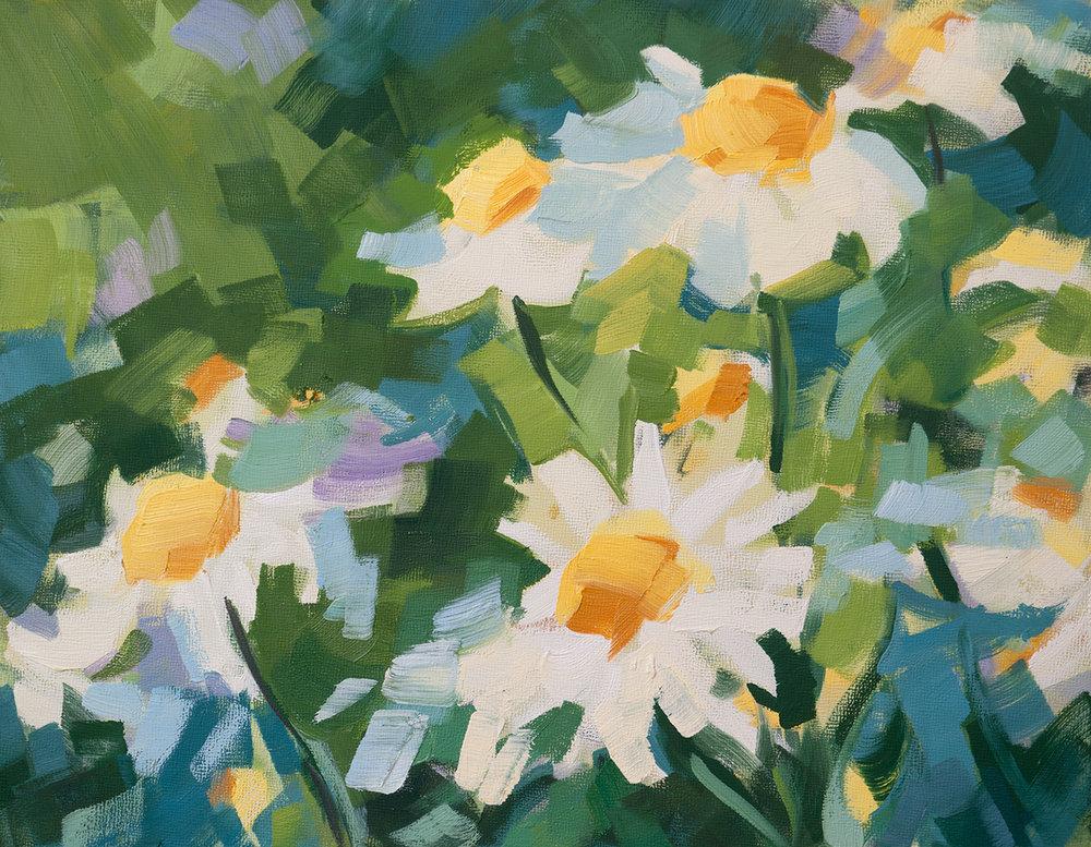 Daisies (#1)