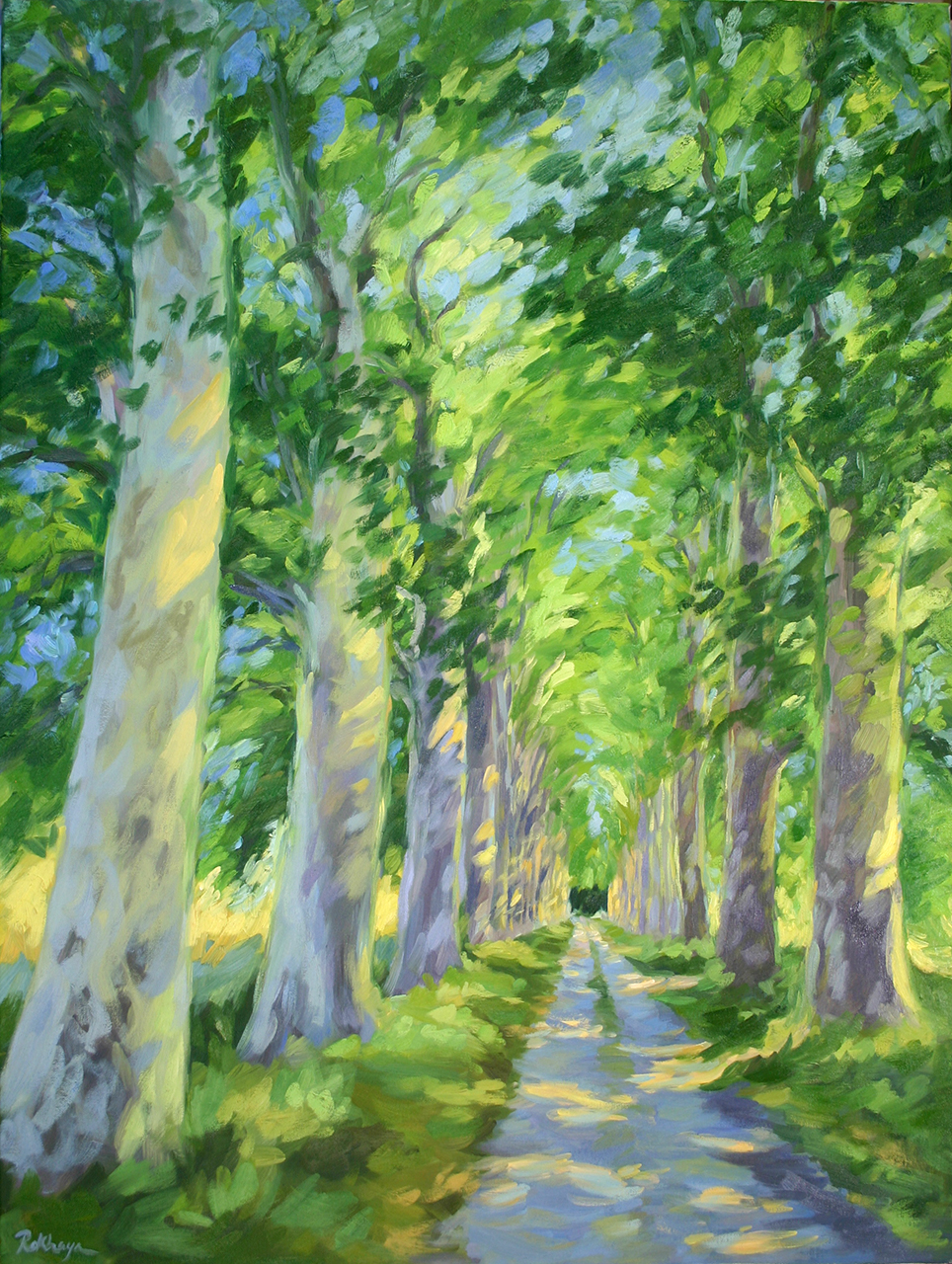 Provence Sycamores