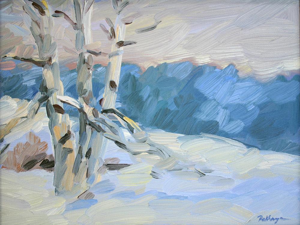 Birch Tree in the Snow