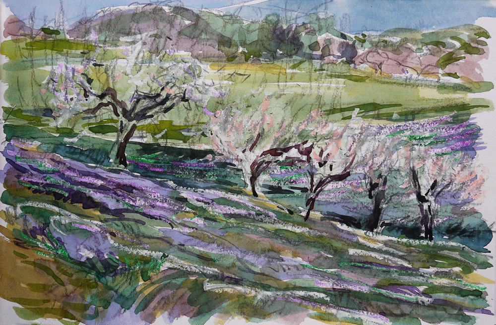Almond Trees & Lavender