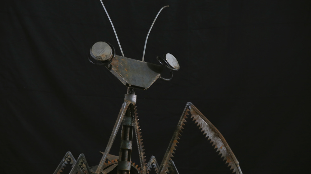 Mantis (CU).jpg