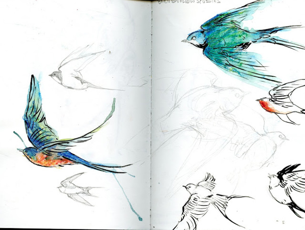 Swallow Studies