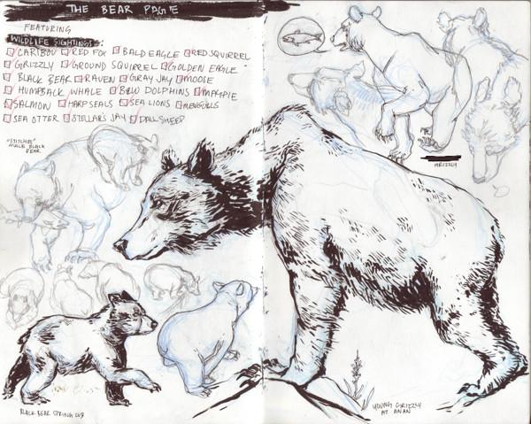 Bear Studies