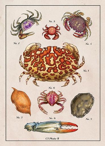 Cumberland_Crabs_RBG72.jpg