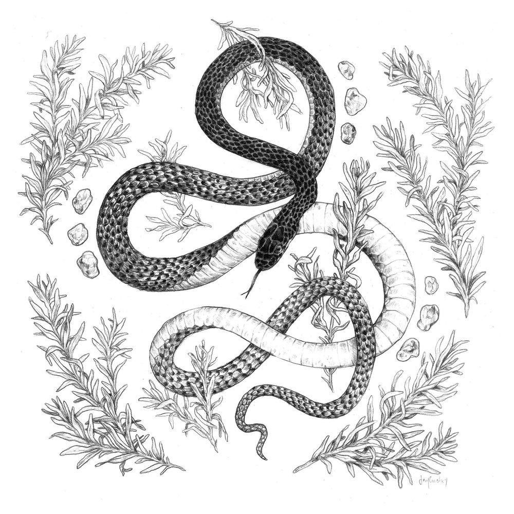 8x8ETA_Snake.jpg