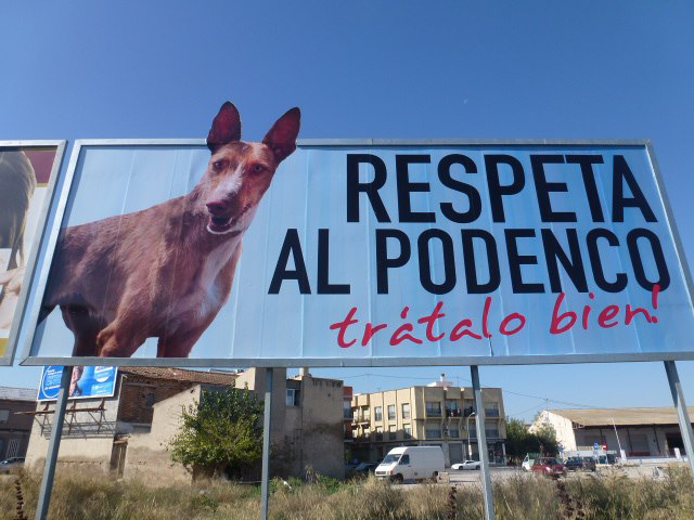 Location: Murica City, Miguel Indurain. GDS with Ibizan Hounds Rescue (LORCA), A.D.A.M (Ayuda y Defensa de Animales Maltratados, Vicky Peña Loredo in Pilar de Horadada), SOS GALGOS (Barcelona), Hurtta Helppi Ry (Finland), Debbie Hurst Harvey, Jackie Harrison-Knapp, Eileen Locatelli, Clare Roberts, Julie Jones, Mandy Simpson, Natalie Blakeman and Sarah Monk. Featured podenco is GdS's own Manolo. Photograph: Diane Hughes, Ibizan Hound Rescue