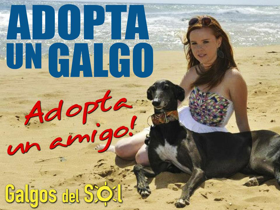 Location: Cc319 auto via in Pozo Aledo.Huge thanks to our star Zoe who is the beautiful chick in the photo with our billboard boy Lucas. Huge thanks to Gareth Doolan who took this wonderful photo and spent the day with our galgos and getting to know them. Also to the people who donated towards the board alongside Galgos del Sol; Brooke Shenson, Monica Whitman, Shirley Latta and Protectora ADAM in Pilar de Horadada.