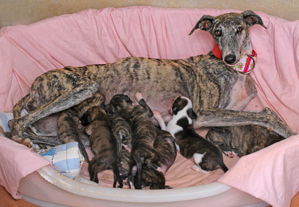 mercedes-and-pups2.jpg