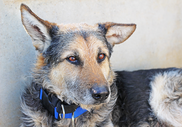 rescue dog spain