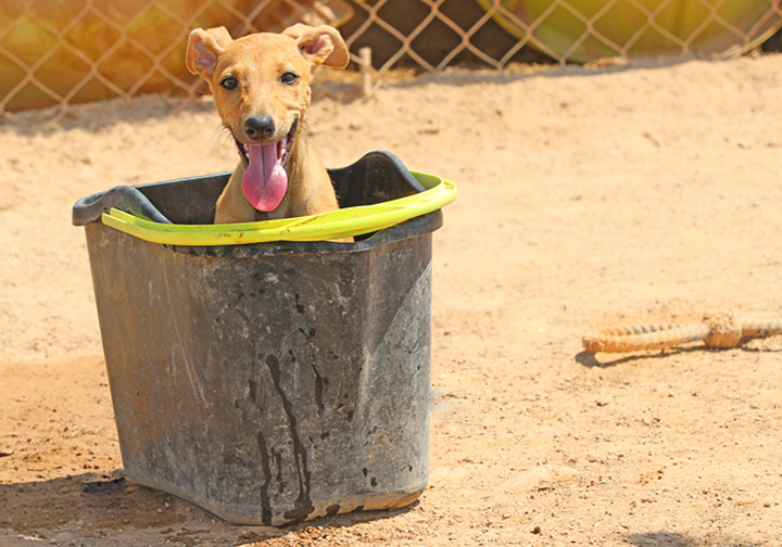 gilda_bucket2.jpg