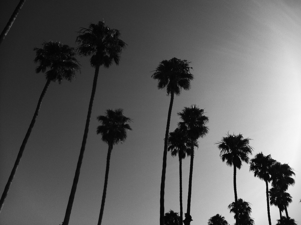 black and white palms, oceanside