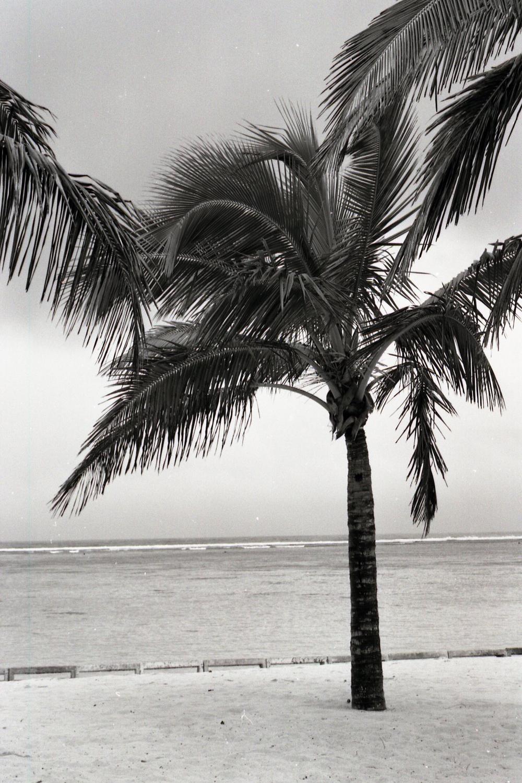 palmtree003.jpg