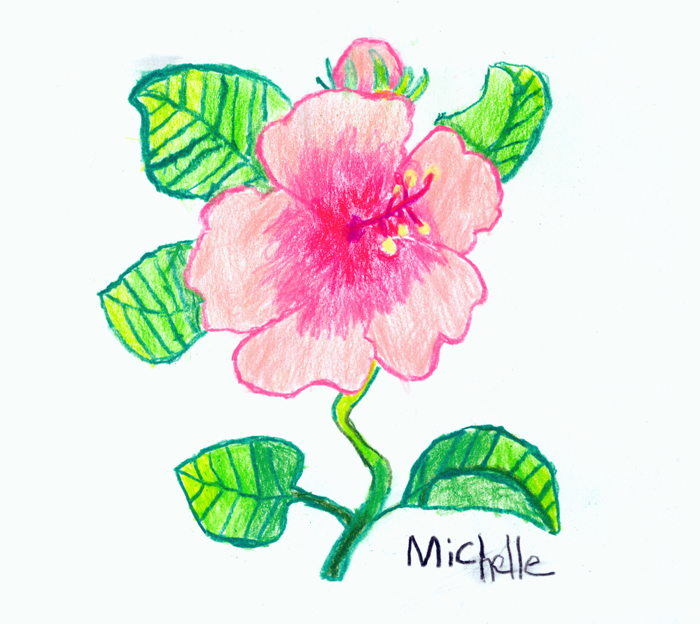 NC-Pink Hibiscus-2012-Color Pencils.jpg