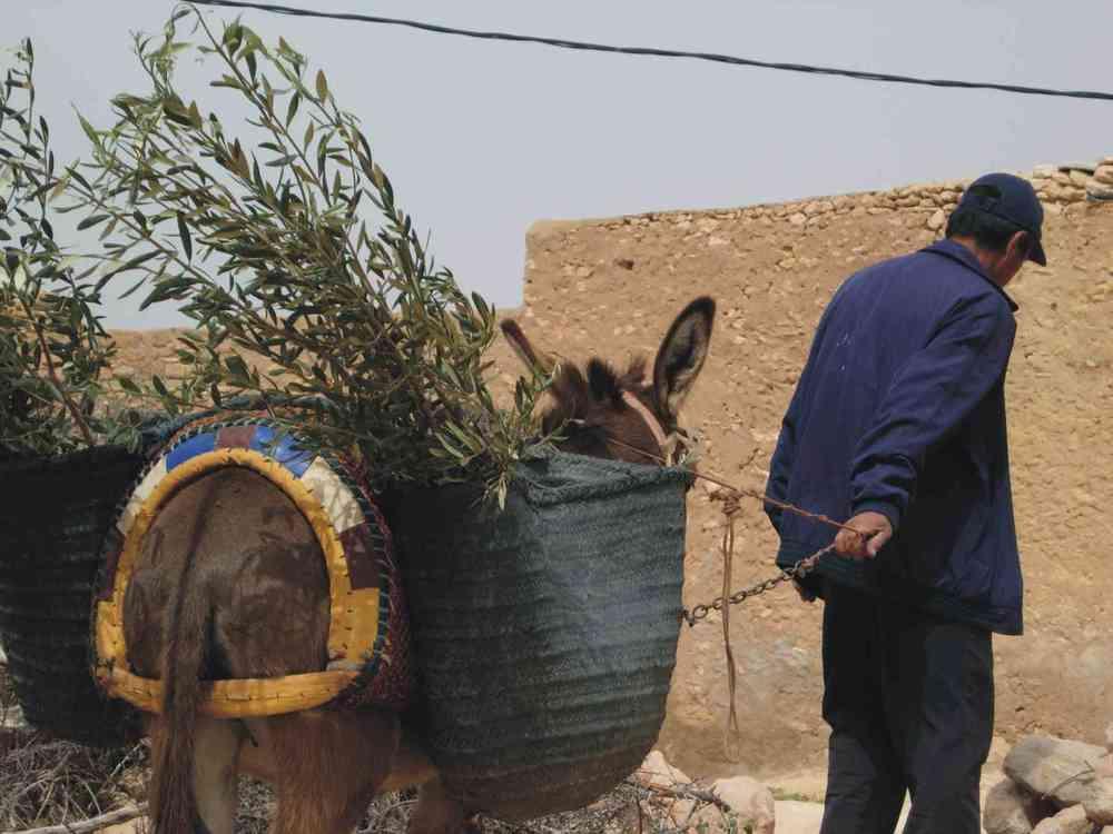 DonkeyTrees.jpg