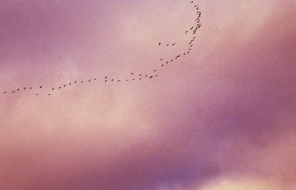 1-RE_BIRD_SKY.jpg