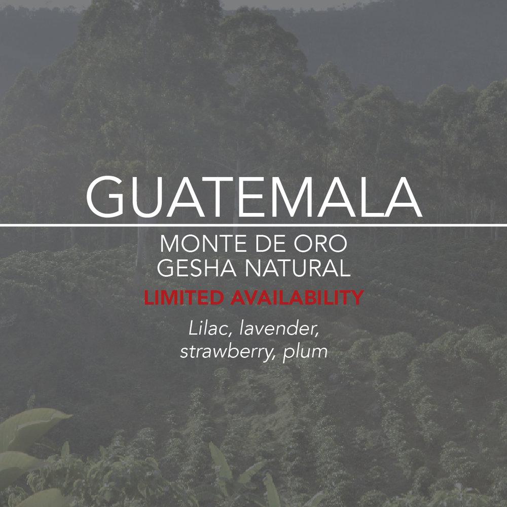 Guatemala Monte De Oro Gesha web  card.jpg