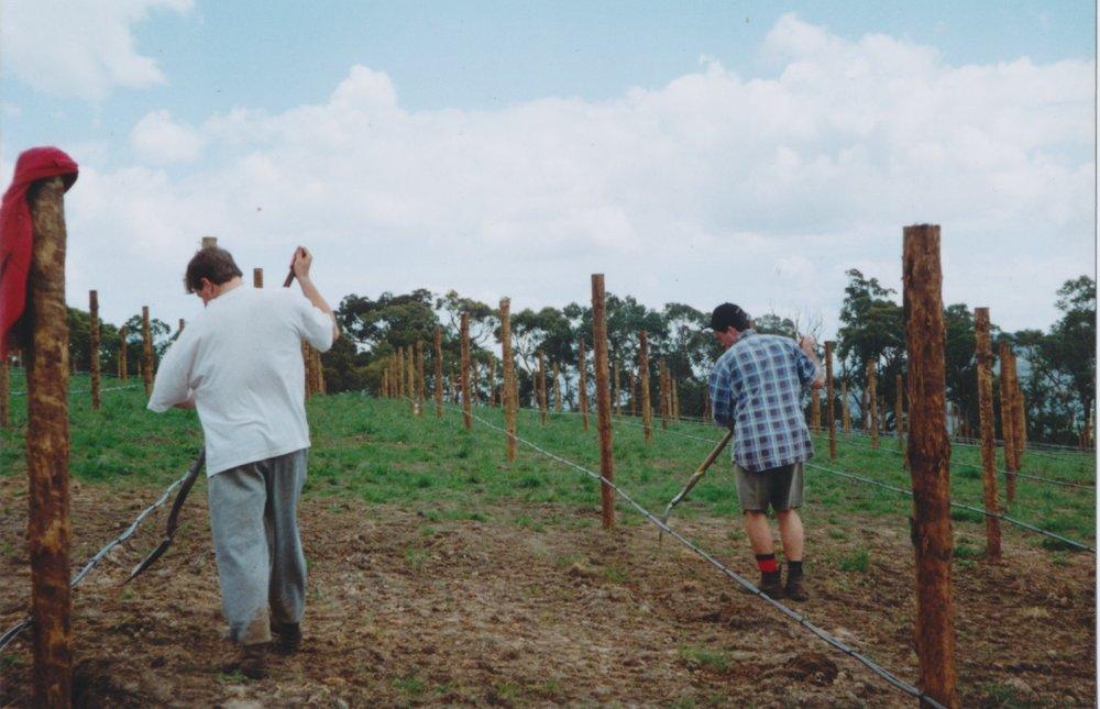 Vine planting - 8000 holes