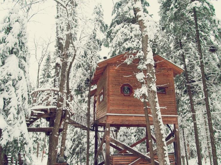 Louise Johnson - Glamping - Tree House