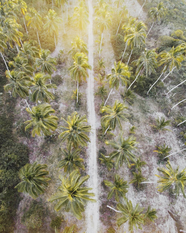 Playa Viva Mexico by Sam Griggs