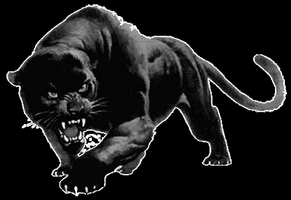 Panther-PNG.png