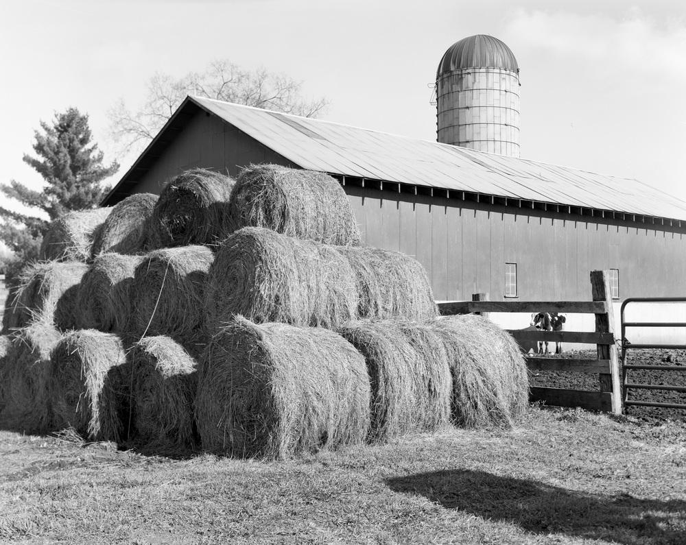 Family Farm delta004.jpg
