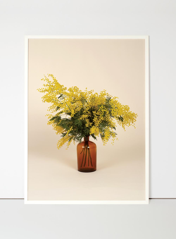 mimosa-flora-indoor.jpg