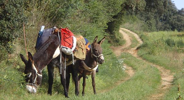 a-pas-dase-burros.jpg