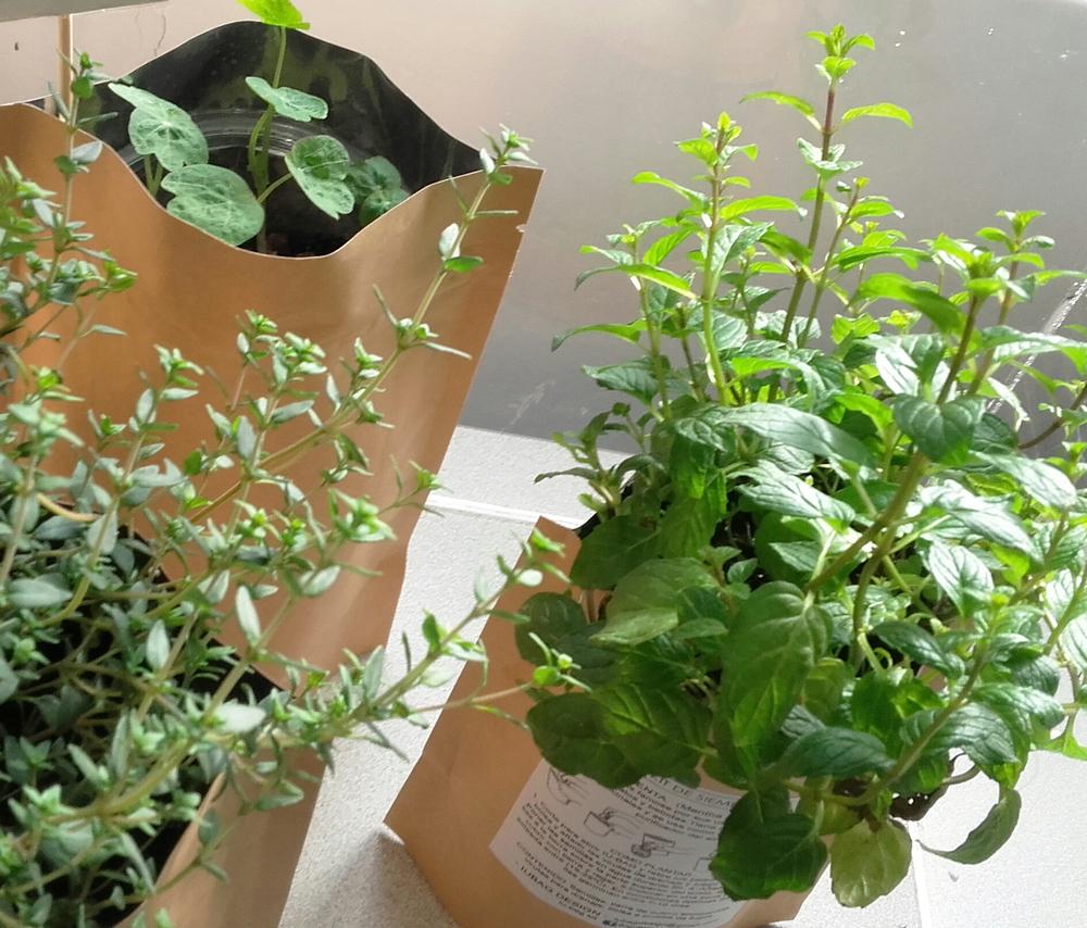 Amb el kit de sembra d'IU-BAG pots tenir espècies fresques i plantes aromàtiques a casa.