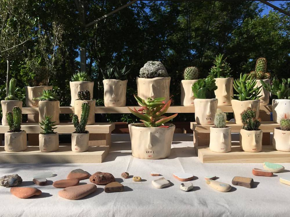 pompilio-plants-testos-cares-cactus.jpg
