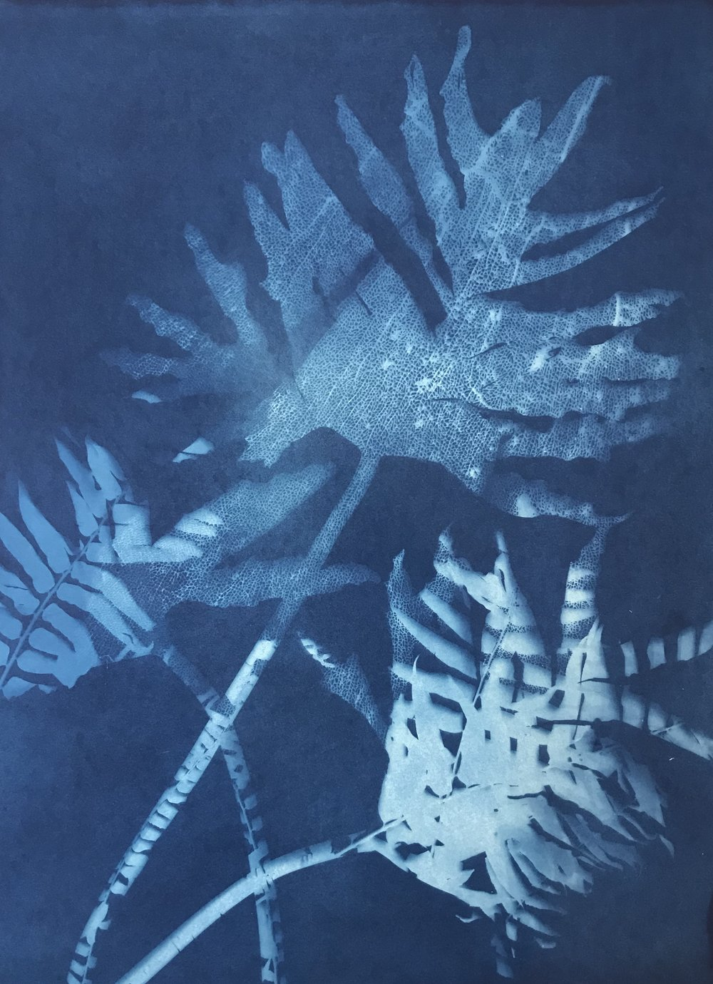 Philodendrons II, 56 x 77cm, £490.00