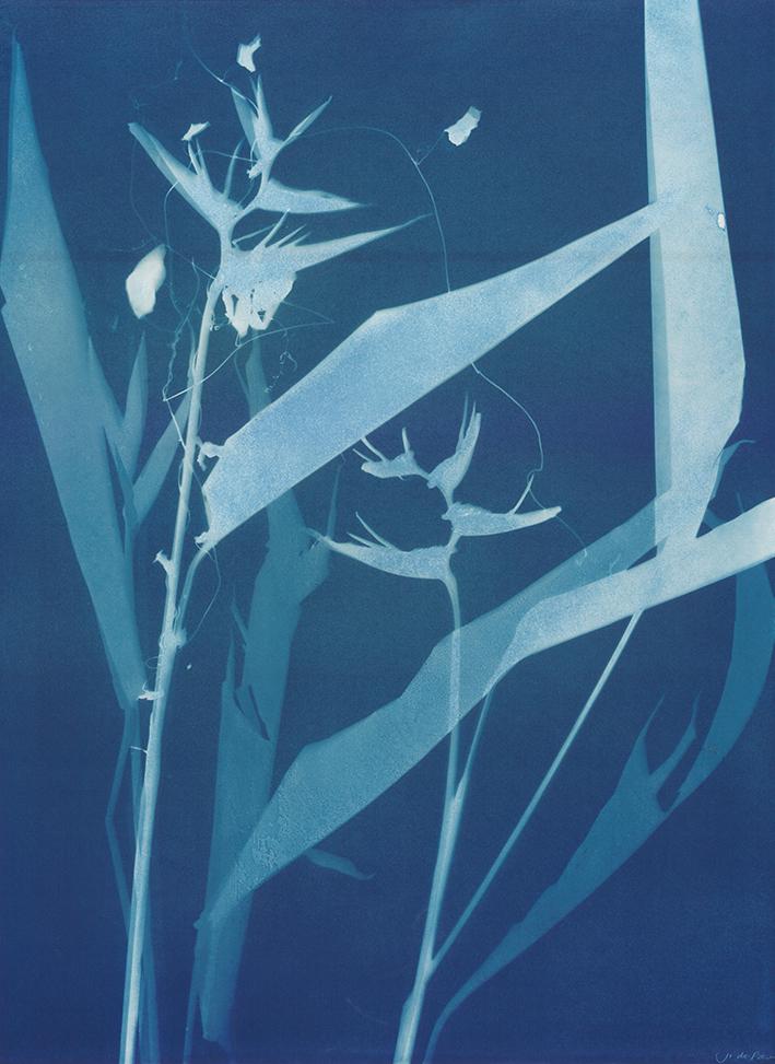 Heliconia, 56 x 77cm  £550.00