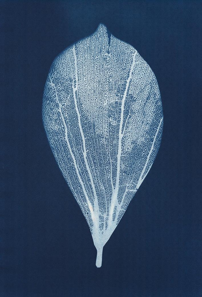 Almond Leaf  35 x 60cm  £295.00