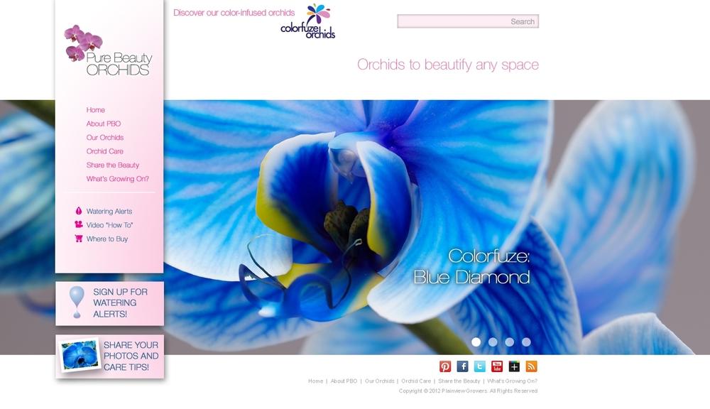 PBO WEBSITE.jpg