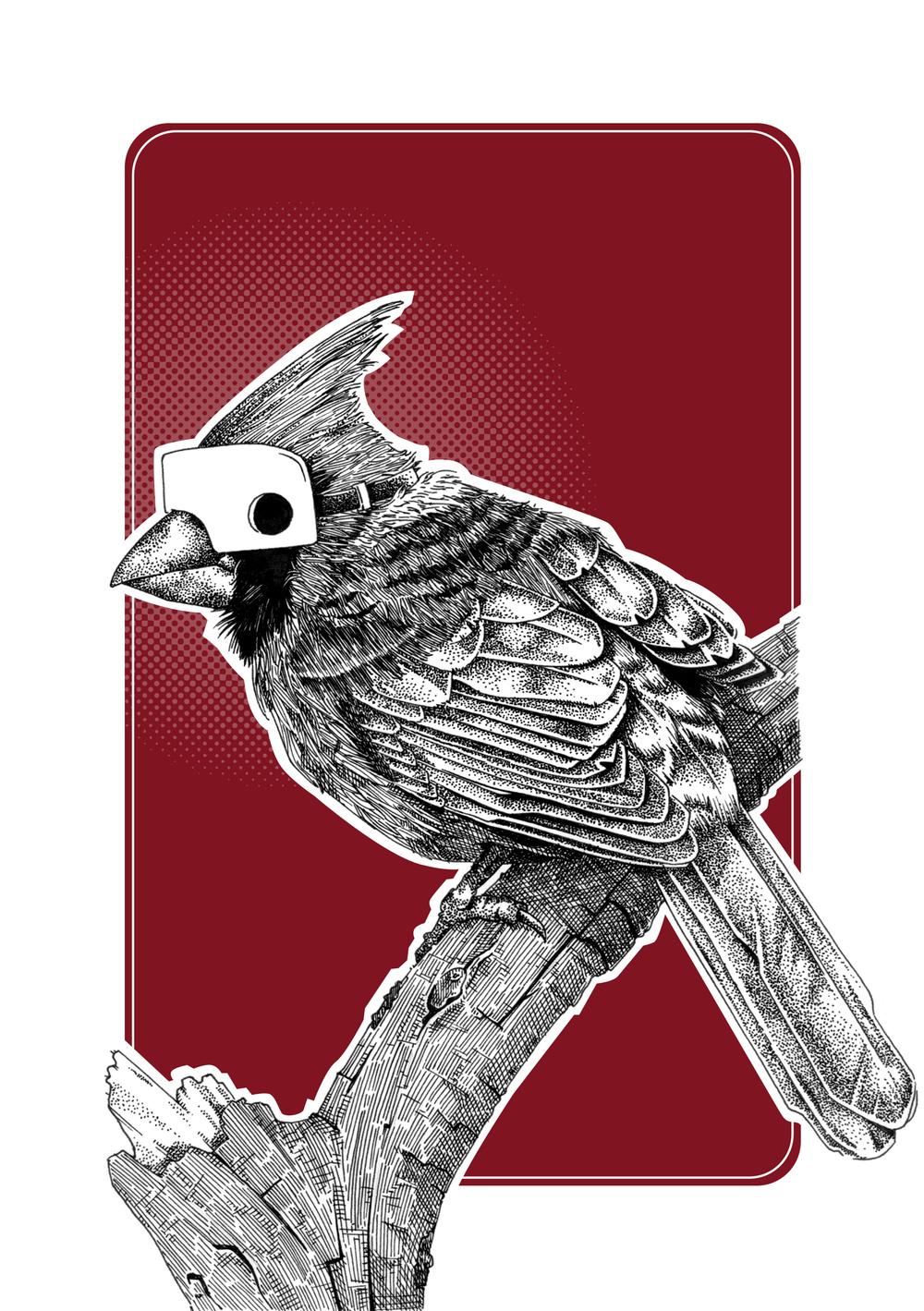 Cardinal final XL.jpg