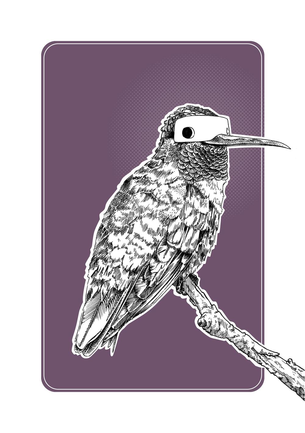 Hummingbird Final XL.jpg