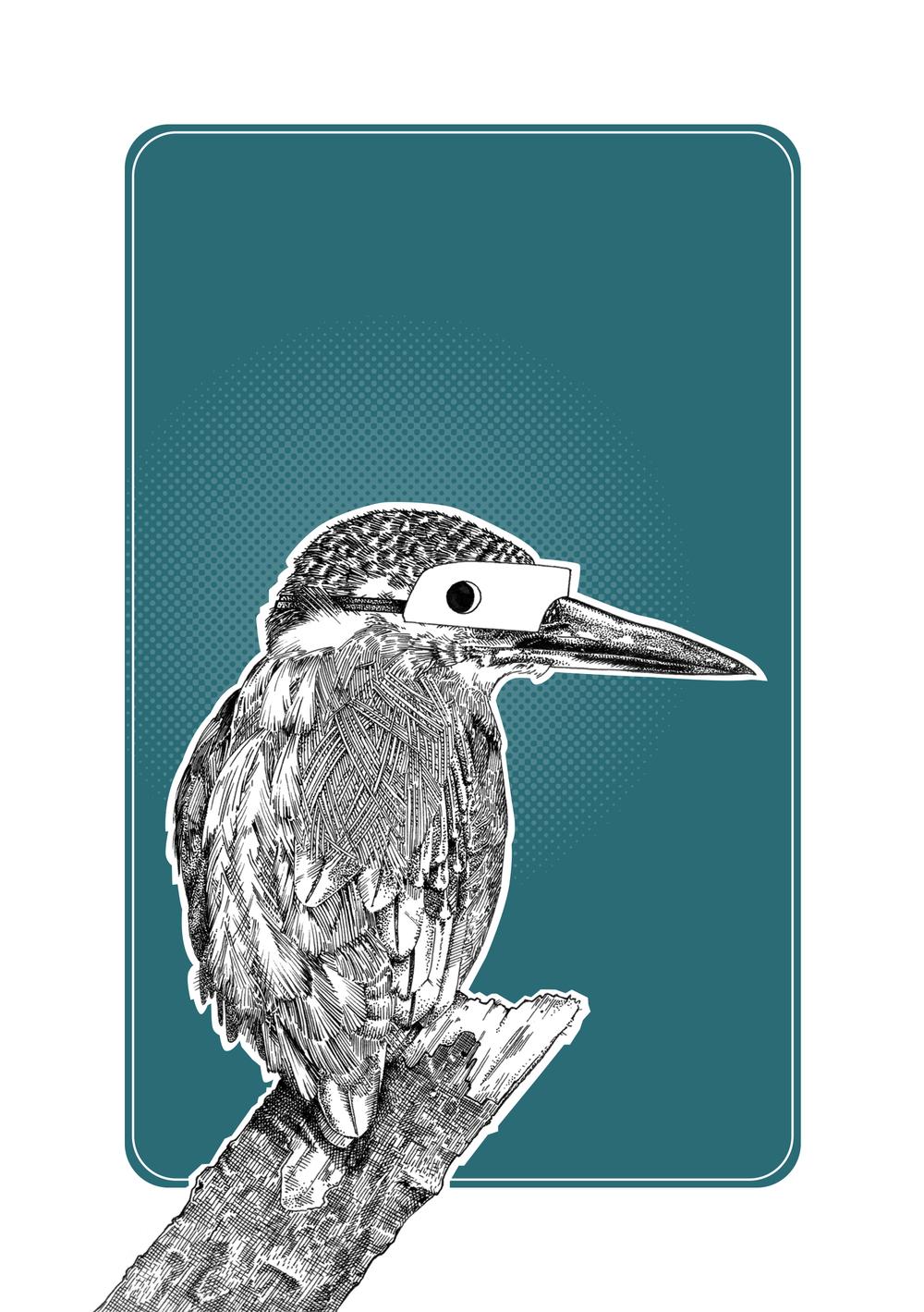 Kingfisher Final XL.jpg