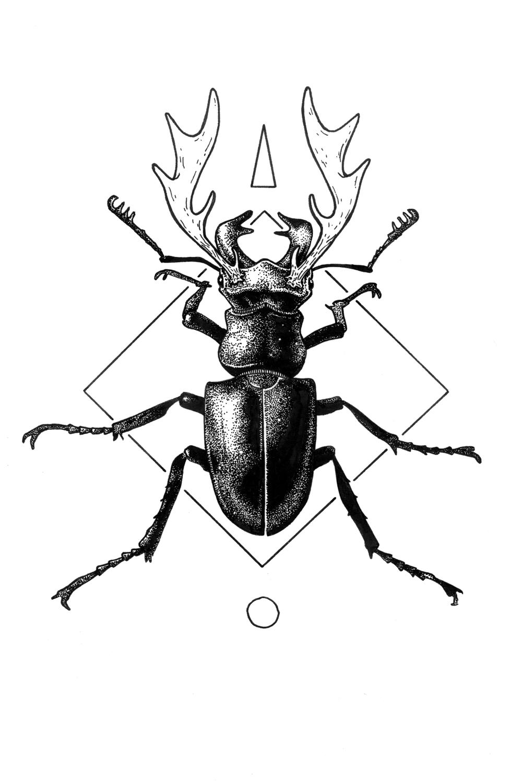 bugs bones hatch Rhinoceros at the Zoo stag beetle web crop