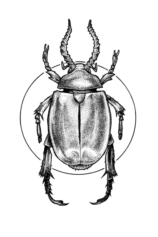 scarab web crop.jpg