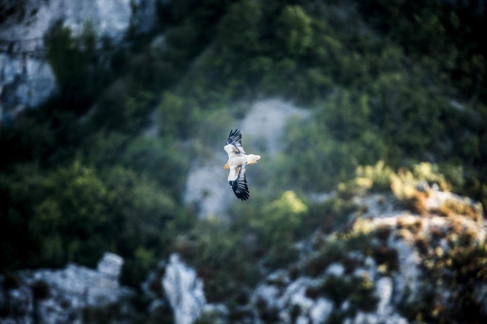 Découverte de la faune provençale