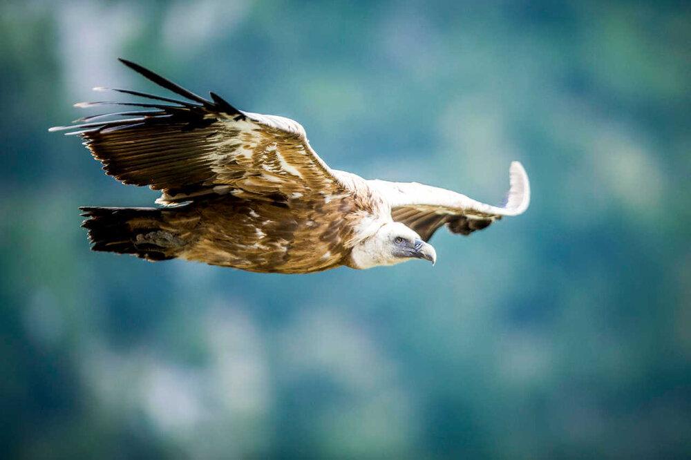Séjour photo animalière en Provence