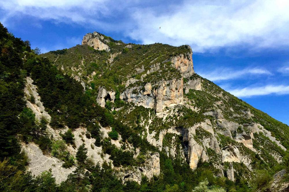 Observation et photo animalière en Provence