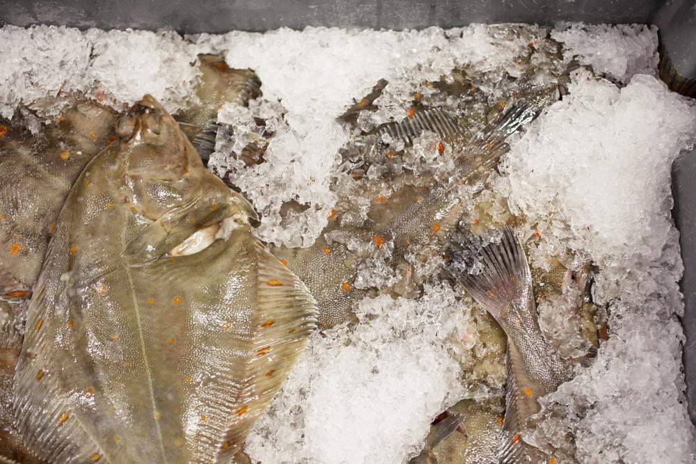 Beth-Druce-Mathew-Stevens-Fish-2
