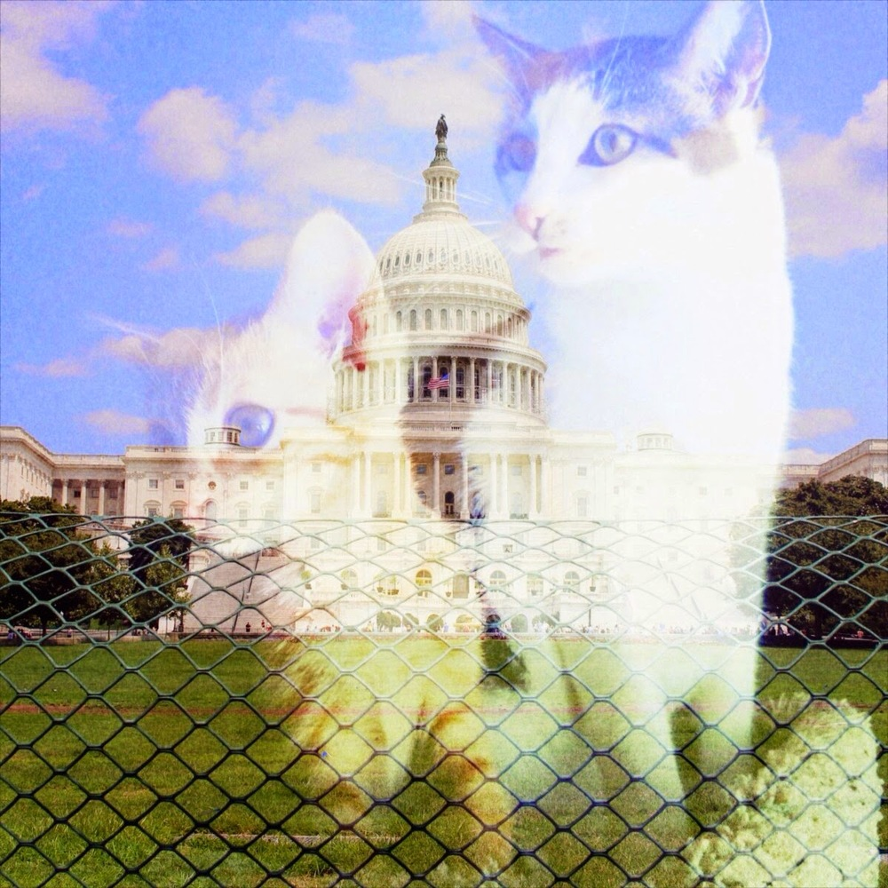 Cats & The White House