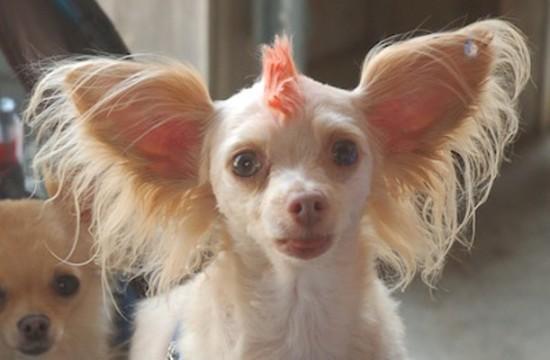 wacky-pet-haircut-e1435055939970.jpg