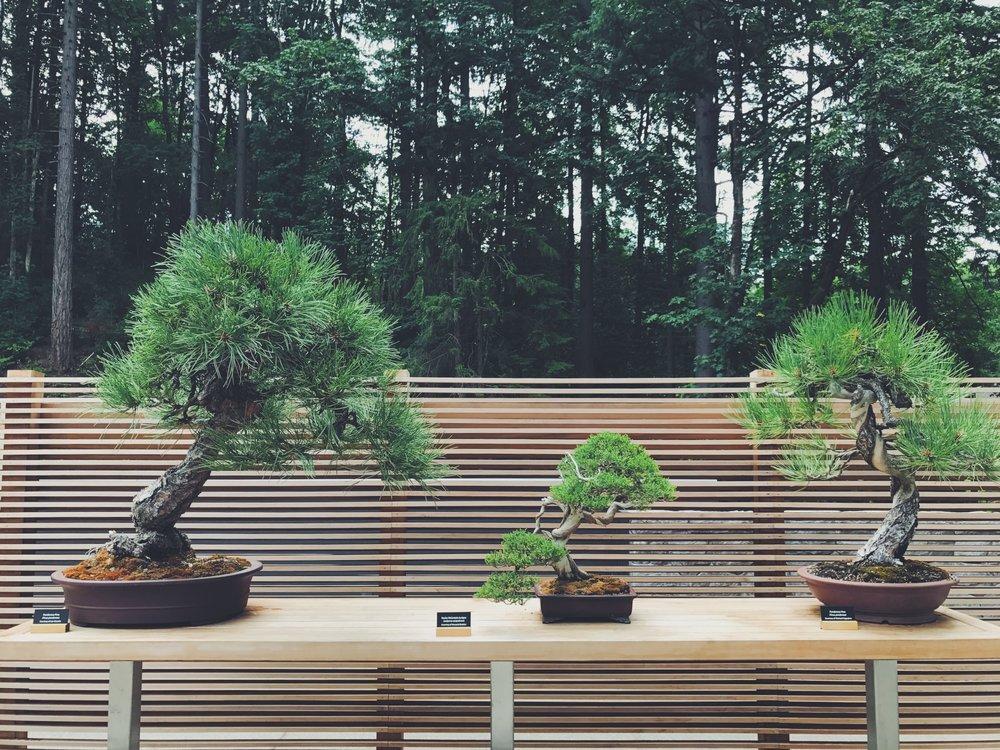 pdx bonsai.jpg