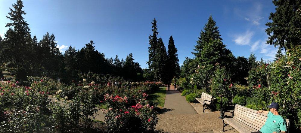 rose garden panorama.jpg