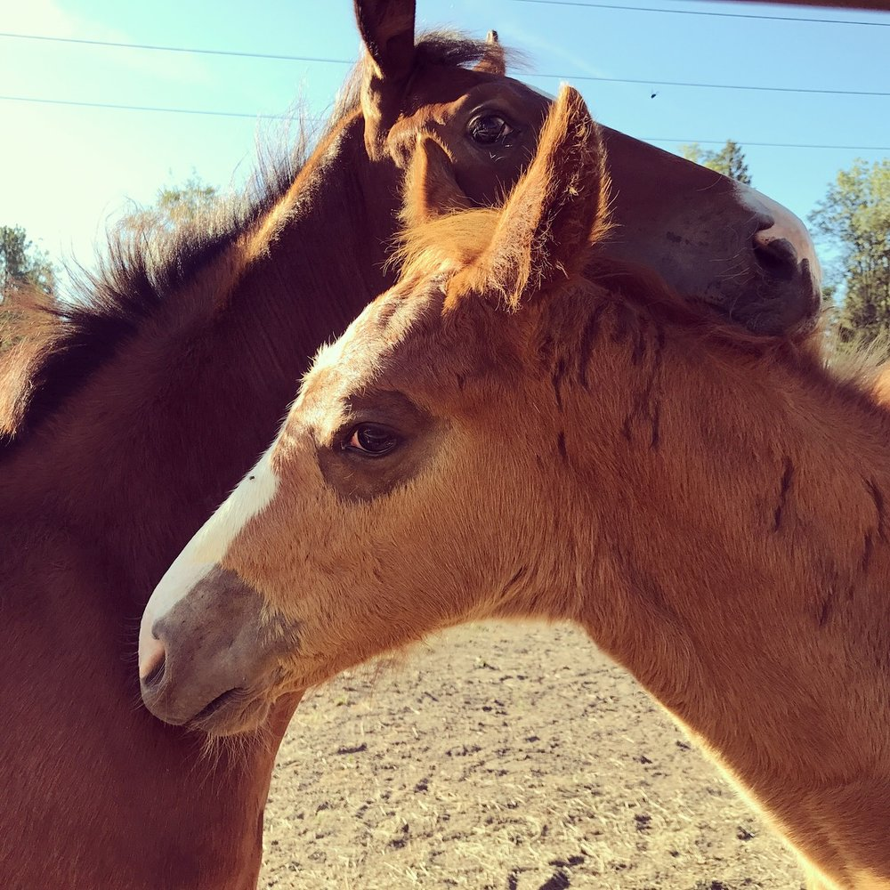 viola farm foals.JPG
