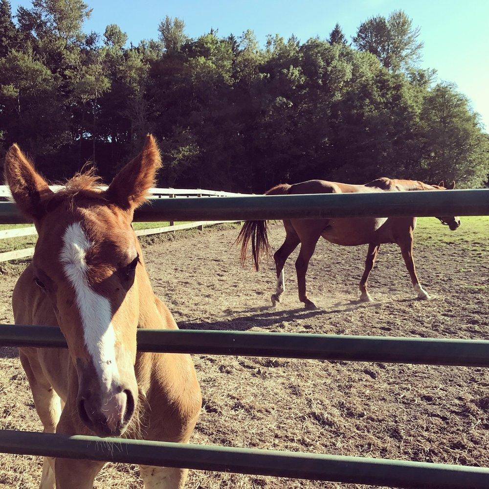 viola farm horses.JPG